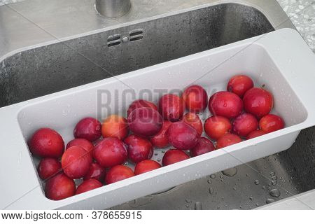Organic Plums In A Sink Ready To Be Washed. Daylight.
