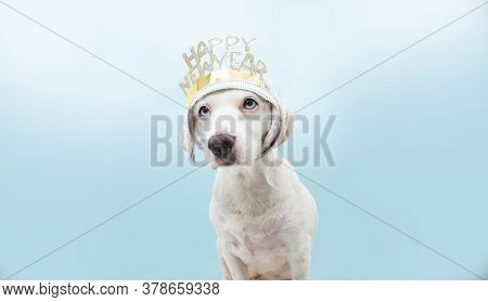 Puppy Dog Celebrating New Year With A Diadem Disguise. Isolated On Blue Background.