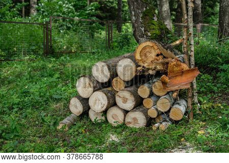 The Logs Are Stacked In A Low Pile In A Clearing With Green Grass, Against The Background Of A Fores