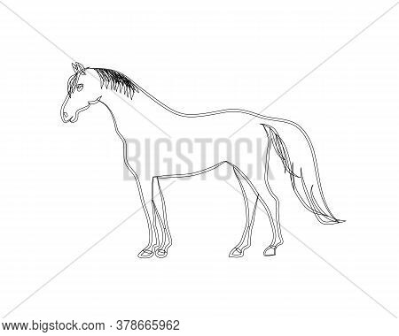 A Horse Stands In The Meadow. Vector Illustration