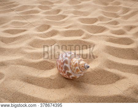 Shell On The Loose Sand Of Beige Color. Travel And Leisure Concept