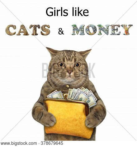 The Beige Big Eyed Cat Is Holding A Yellow Leather Purse Full Of Dollars. Girls Like Cats And Money.