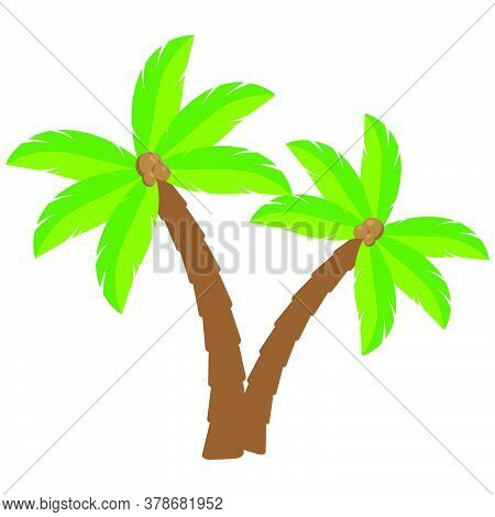 Tropical Palm Trees Cartoon Illustration.two Curved Coco Palm Isolated On White.  Exotic Palmtree Il