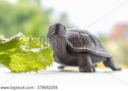 Happy Cute Smile Of Small Brown Iron Turtle Sitting With A Bright Green Salad Leaf By The Window In