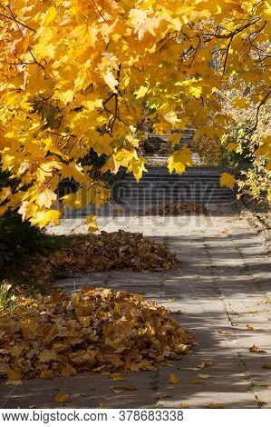 Different Plants During The Changes In The Autumn Season, Beautiful Nature And The Specifics Of The