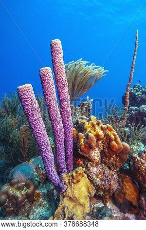Caribbean Coral Reef Off Coast Of Island Of Bonaire