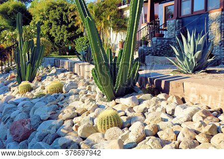 Cacti Plants Surrounded By Rocks At A Drought Tolerant Garden Taken At A Garden In A Residential Yar