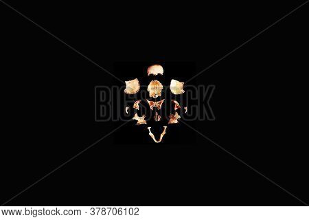 Human Skull Split View Of Medical Lab Skull Isolated On Black, Realistic Skull Bone,good For Medical