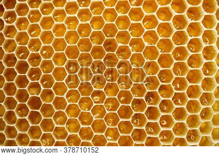 Background Of Golden Honeycomb Close Up. Apiculture.