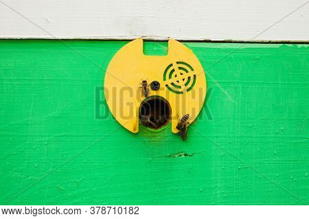 Bees Fly Into A Wooden Bee Hive. Apiculture.