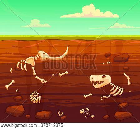 Ground Layers With Bones. Buried Fossil Animals, Dinosaur, Mammot, Fish Skeleton Bone And Shellfish.