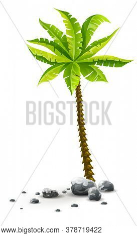Single tropical coconut palm tree plant with green leaves in stones. Nature detail. Coco palm-tree, isolated on white transparent background. 3D illustration.