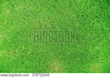 Nature Green Grass Texture Background, Top View Of Grass Ideal Concept Used For Making Green Floorin