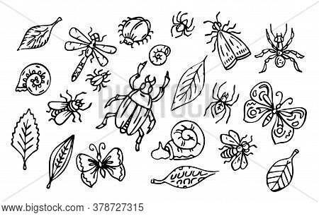 Vector Insects And Leaves Set, Outline Collection Of Bugs, Snails And Leaves, Black Line Art Isolate