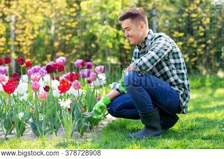 gardening and people concept - happy smiling middle-aged man with pruner taking care of flowers at summer garden