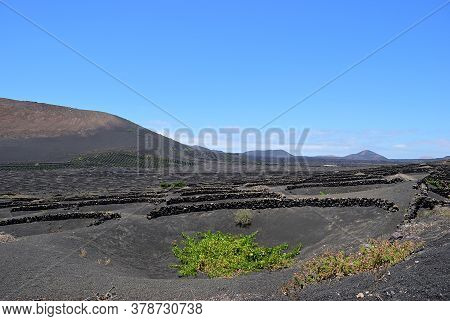 Landscape With The Famous Vineyards Of La Geria On Volcanic Soil Lanzarote Island. Spain