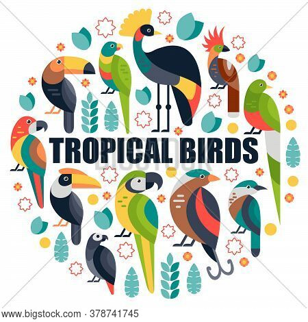 Flat Style Illustration With Toucan, Blue And Yellow Macaw, Bird Of Paradise And Other Types Of Bird