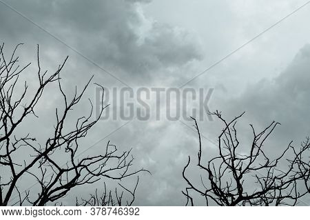 Silhouette Dead Tree On Dark Dramatic Sky And Gray Clouds. Dark Sky And Dead Tree Background For Hal