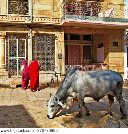 Dayly life of Indian old town Jaisalmer. People and cows on the streets. Rajastan Feb 2013. India