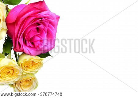 A Red And Yellow Rose Isolated On White Background. Red Flowers Isolated. Flat Lay. Copy Space. Post