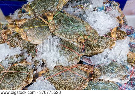 Flower crab, Blue swimmer crab, Blue manna crab, Sand crab, Portunus pelagicus . stack of fresh blue