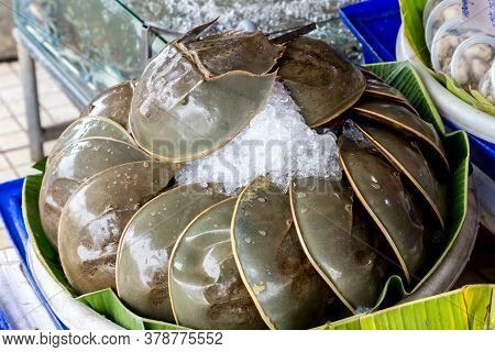 Many Fresh Pimps Are Sold In The Seafood Market. Thai Food. Spicy Horseshoe Crab Egg Salad, Pimp Egg