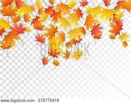 Maple Leaves Vector, Autumn Foliage On Transparent Background. Canadian Symbol Maple Red Orange Yell