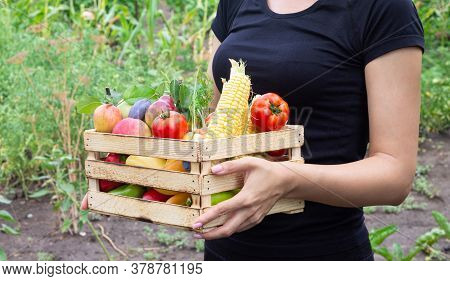 Woman Holding Wooden Crate With Eco Organic Veggies And Fruits. Food Delivery Or Donate Concept