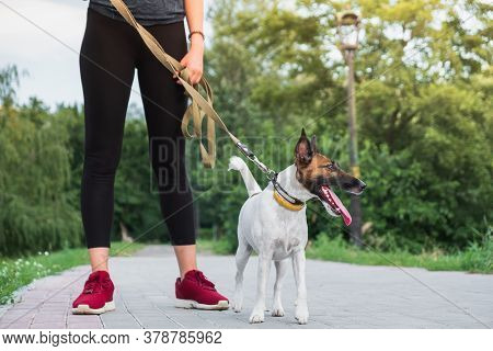 Dog On The Leash With Jogger. Running, Exercising With Pets, Active Lifestyle In Town, Woman Running