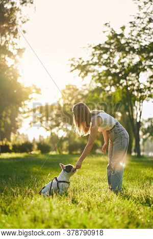 Side View Of Young Woman Training French Bulldog In City Park, Beautiful Summer Sunset On Background