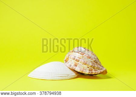 Seashells On A Yellow Background. Two Seashells Lie In The Middle Of The Image. Marine Concept.