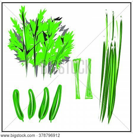 Green Onions.cucumbers.dill. Greenery. Cabbage. Celery. Isolated Images Of Vegetables On A White Bac
