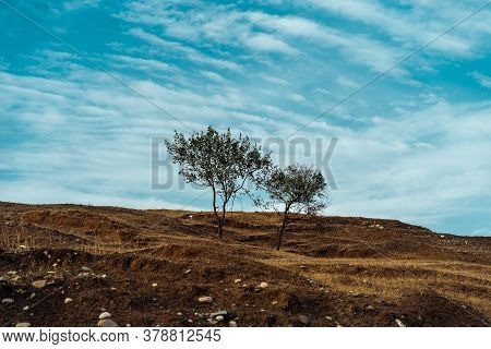Trees Growing Against Cloudy Sky. Thin Trees Growing On Dry Hill Against Cloudy Blue Sky On Sunny Su
