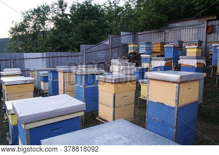 Bee In The Garden, Apiary. Bees Swarming Near Beehive. Stack Of Beehive Boxes In Bee Farm