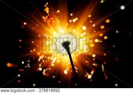 dandelion flower silhouette on shiny firework background