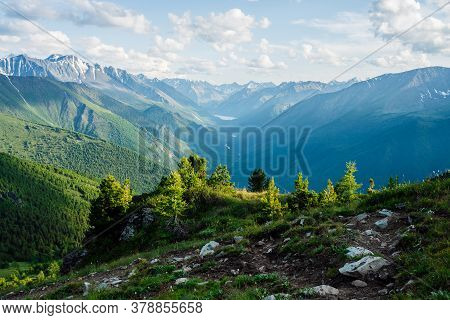 Beautiful Small Coniferous Trees On Rocky Hill With View To Snowy Giant Mountains And Green Forest V