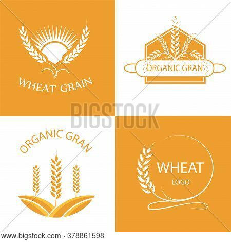 Vector Logos With Wheat Grains. Set Of Vector Linear Wheat, Fields Logo Design Template Wheat And Gr