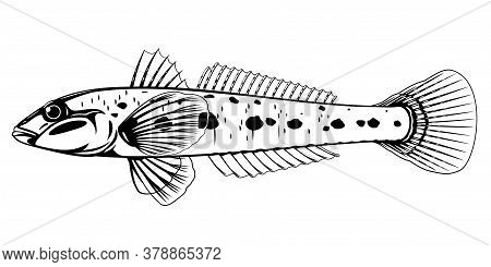 Realistic Monkey Goby Fish In Black And White Isolated Illustration, One Small Demersal Fish On Side