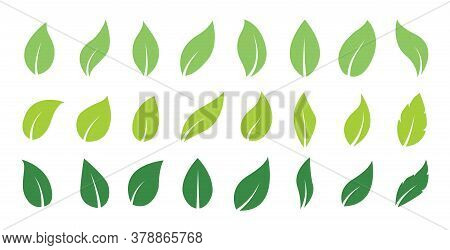 Green Abstract Leaf Icons. Natural Greens Young Plants Pictograms And Leaf Or Forest Branch Leaves.
