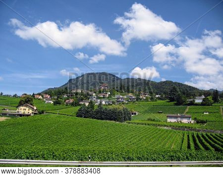 Bright Green Vineyards Spread Out Against A Backdrop Of Dark Mountains And Blue Skies. Foreground