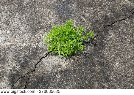A Small Tree Growing Along The Rift In The Road.