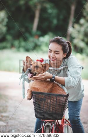 Woman And Dog Riding A Bicycle. Young Happy Woman With Her Dog In Park. Attractive Girl With An Outd