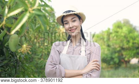 Agricultural Concepts. Asian Women Are Confident In Mango Farms. 4k Resolution.