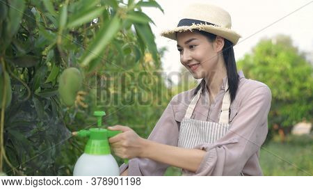 Agricultural Concepts. Asian Woman Injecting Hormones In The Garden. 4k Resolution.