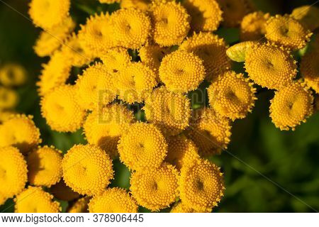 Beautiful Yellow Flower On A Green Background.