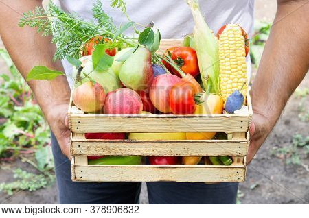 Man Holding Rustic Crate Full Of Fresh Eco Vegetables And Fruits. Organic Healthy Food Concept