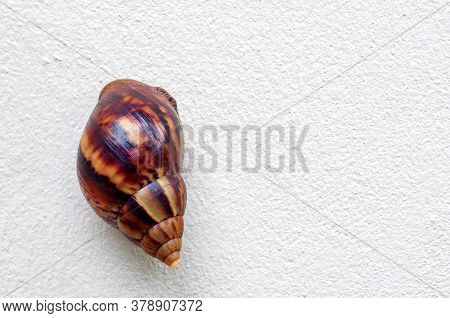 Snail, Land Snail, Garden Snail, Terrestrial Pulmonate Gastropod Molluscs Climb Up On White Gray Cem