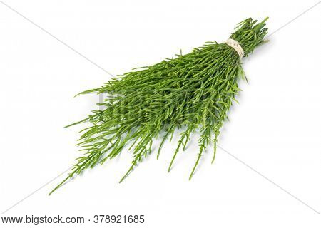 Bouquet of fresh green field horsetail twigs isolated on white background