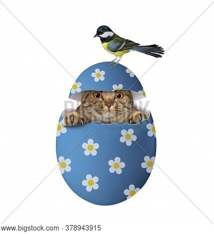 The Beige Big Eyed Cat Is Hiding In A Blue Easter Egg. A Bird Is On The Top Of The Egg. White Backgr