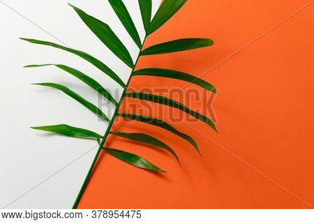 Tropical plant leaf on yellow and white paper background. Flat lay, top view, minimal design template with copyspace.